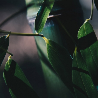 bamboo-image